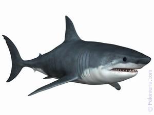 Акула в воде по соннику
