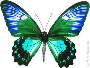 большая Бабочка по соннику