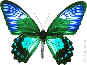цветная Бабочка по соннику