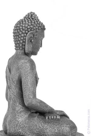 Буддийский сонник про секс с волком