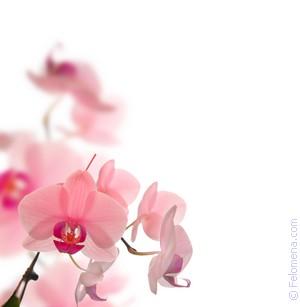 Цветы на дереве по соннику