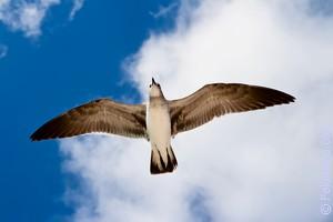 Сонник толкование влетели в форточку две чайки