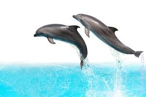 Дельфины в бассейне по соннику
