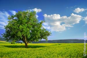 зеленые Деревья по соннику