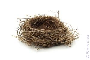 Гнездо с яйцами по соннику