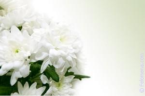 белые Хризантемы по соннику
