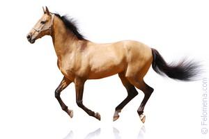 коричневый Конь по соннику