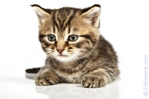 Сонник Кошка 😴 приснилась, к чему снится Кошка во сне видеть?