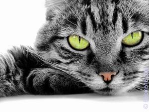 К чему снятся красные коты