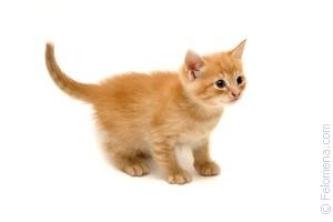 купить Котенка по соннику