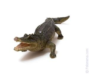убить Крокодила по соннику