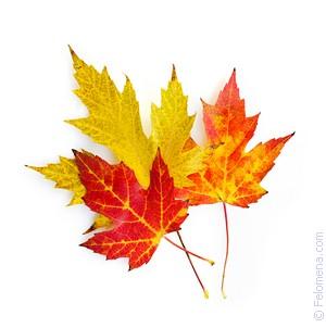 осенние Листья по соннику