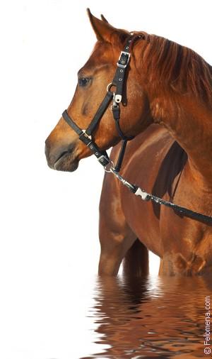 гладить Лошадь по соннику