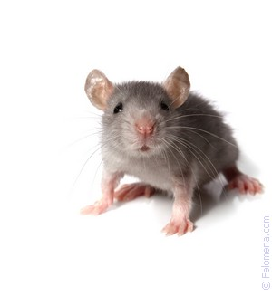 Мышь серая по соннику