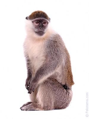Мамин секс с обезьяной
