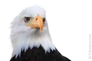 Орел клюет по соннику