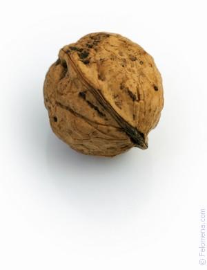 Сонник кедровые орехи видеть