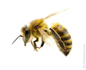 Огромная пчела сонник