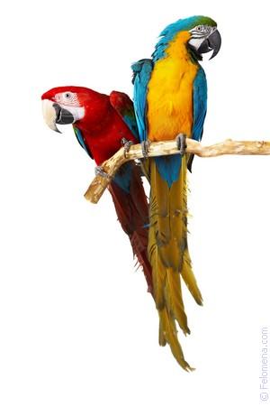 Сонник Попугай 😴 приснился, к чему снится Попугай во сне видеть?