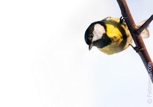 домашняя Птица по соннику