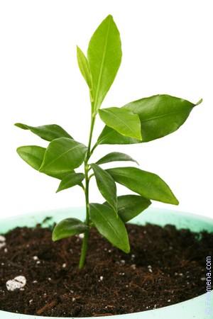 зеленые Растения по соннику