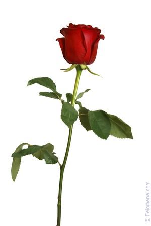 черные Розы по соннику