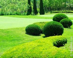 красивый Сад по соннику
