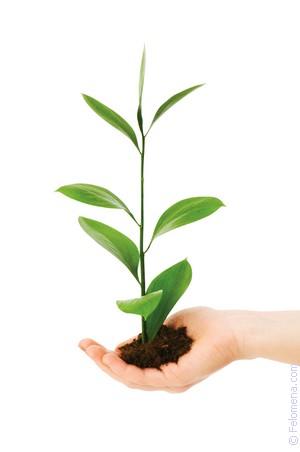 Защита растений от заморозков Своими руками - Как 17