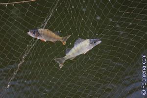 Сети рыболовные по соннику