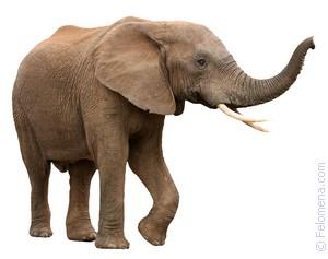 Слон женщине по соннику