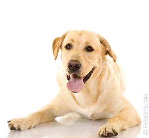Собака на поводке по соннику
