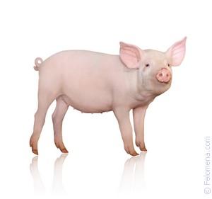 резать Свинью по соннику