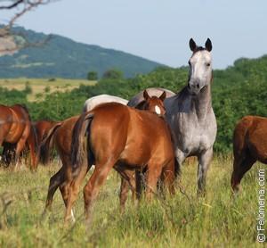 Табун лошадей по соннику