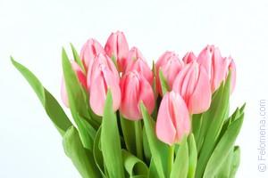 красные Тюльпаны по соннику