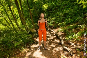Заблудиться в лесу по соннику