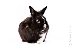 Заяц кролик по соннику