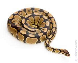 змея ест Змею по соннику