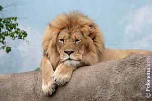 Сонник толкование снов к чему снится животные